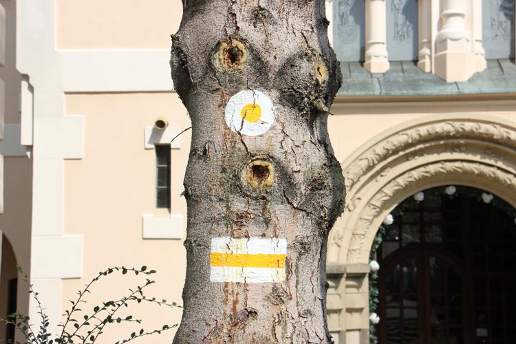 Odnowiony szlak żółty Jarosław – Radawa