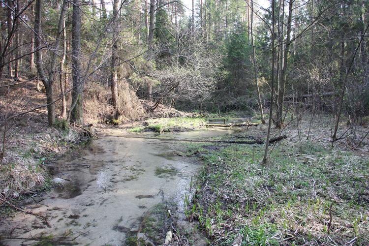 Dolina potoku Jeleń