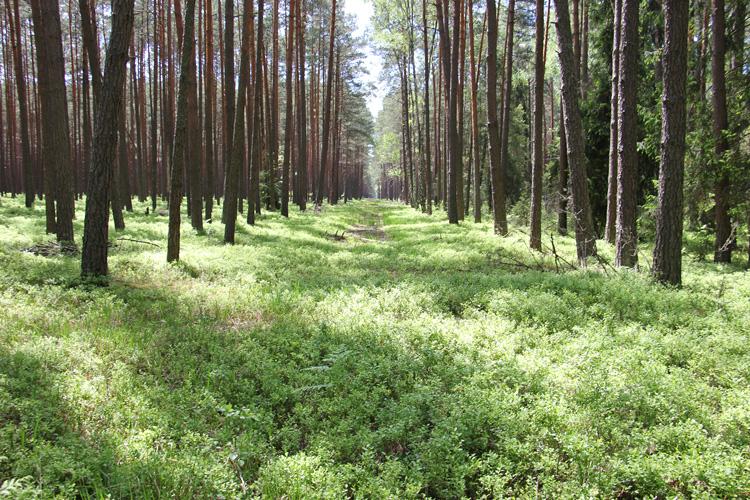 Dawna leśna kolejka wąskotorowa w Suścu