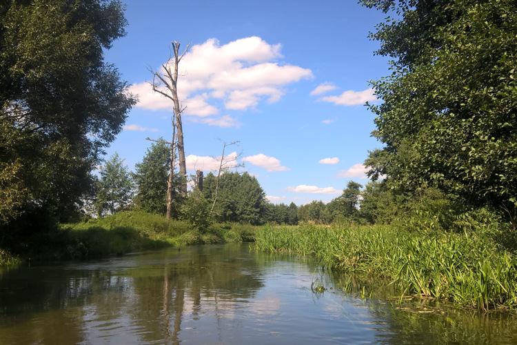 Spływ Wieprzem: Zwierzyniec – Szczebrzeszyn