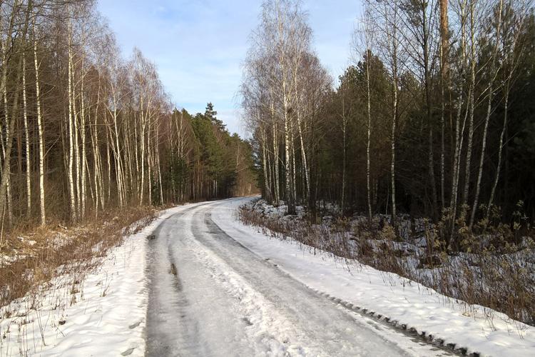 Zima w Puszczy Solskiej