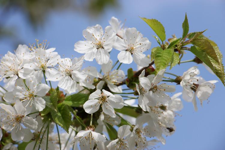 Huta Kryształowa wiosną