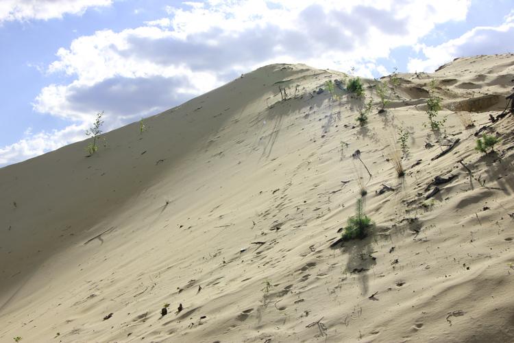 Roztoczańska pustynia