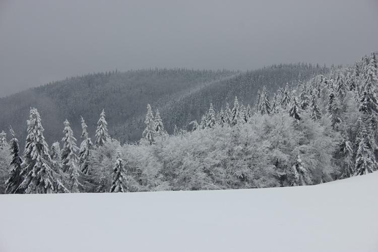 Zima w Beskidzie